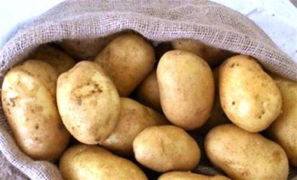 Μεσσηνία: 63χρονος έκλεψε 4 τόνους πατάτες - Τις μάζευε τη νύχτα από χωράφια!