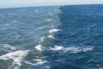 Βγήκαν από το νερό γιατί … μαύρισε η θάλασσα