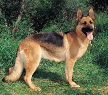 Ο δήμαρχος Καλαμάτας Παν. Νίκας διώχνει τα σκυλιά από τα πάρκα