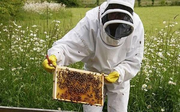 Μεσσηνία: Αιτήσεις μελισσοκόμων για ένταξη σε προγράμματα