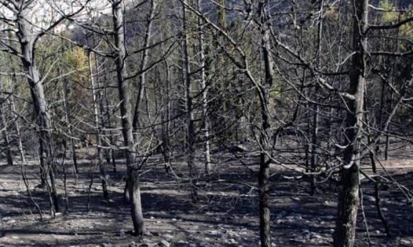 Αναδασωτέα 106.348 στρέμματα στη Μεσσηνία