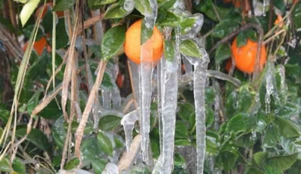 πορτοκάλια - ΕΛΕΥΘΕΡΙΑ Online