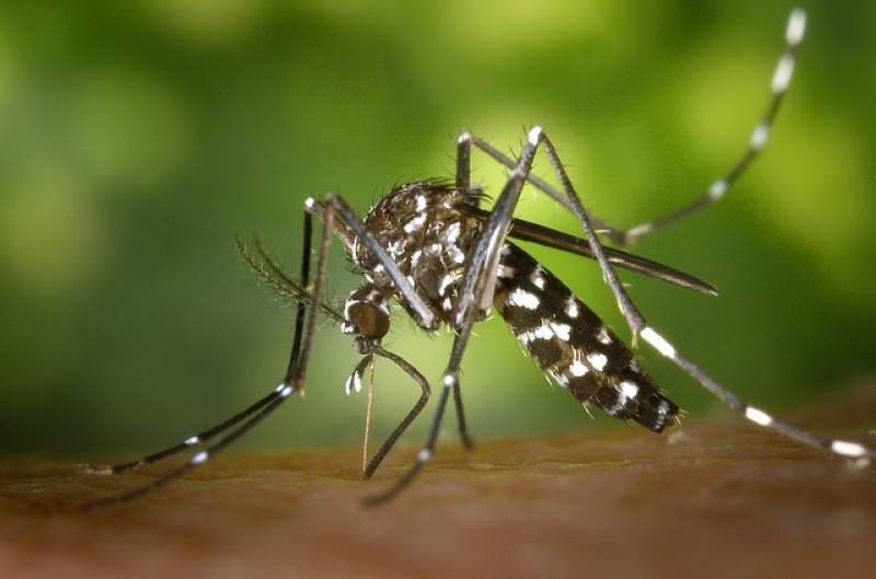 Ακυρώθηκε ο διαγωνισμός καταπολέμησης της Περιφέρειας Πελοποννήσου: Στο έλεος των κουνουπιών κάτοικοι και επισκέπτες