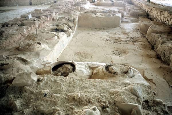 Επί Τάπητος: Ιστορικά στοιχεία γιατην ελαιοκαλλιέργεια