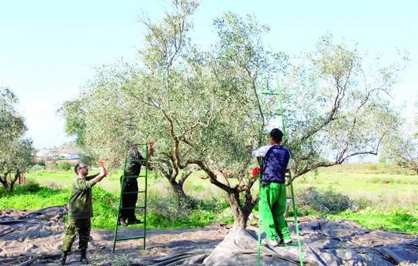Ερχονται κατασχέσεις των λογαριασμών τους 23,4 εκ. ευρώ χρέη στον ΟΓΑ οι αγρότες της Μεσσηνίας