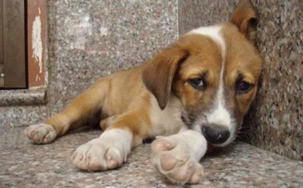 1 χρόνος φυλάκιση για εγκατάλειψη σκύλου και πρόστιμο 5.000 ευρώ σε κυνηγό από την Χώρα