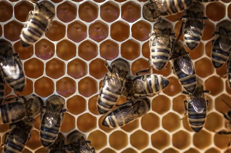 Οι μελισσοκόμοι Μεσσηνίας, Αρκαδίας και Λακωνίας για τους ψεκασμούς