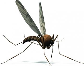 Για να αντιμετωπιστούν τα σμήνη των κουνουπιών: Νέοι ψεκασμοί στη Γιάλοβα