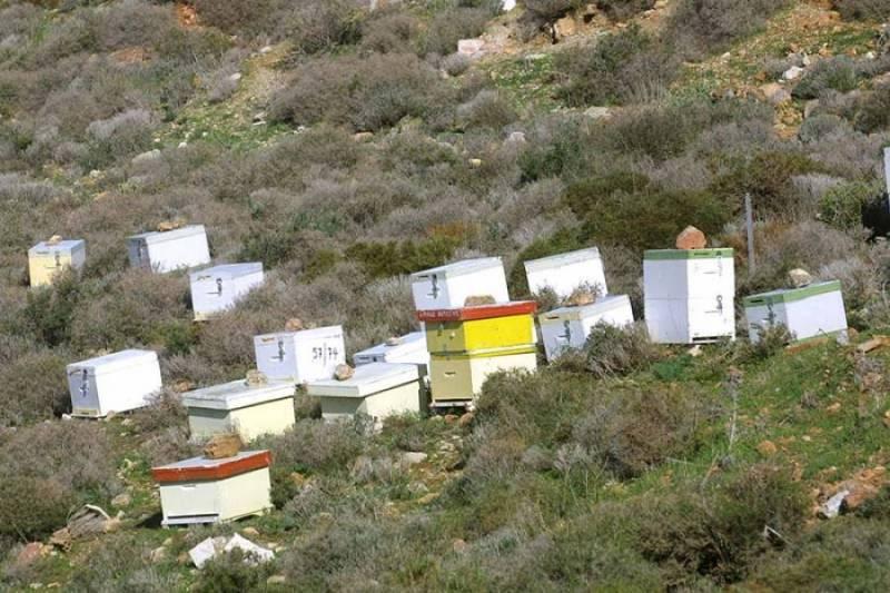 Μεσσηνία: Εκπαιδευτικός κατηγορείται για κλοπή μελισσοσμηνών
