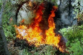 Εσβησε η φωτιά στο φαράγγι της Νέδουσας