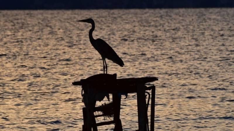Μεγαλύτερο πουλί στην παγκόσμια εικόνα
