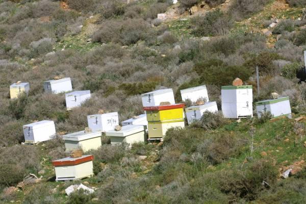 Εκκληση μελισσοκόμων για ορθή χρήση φυτοφαρμάκων