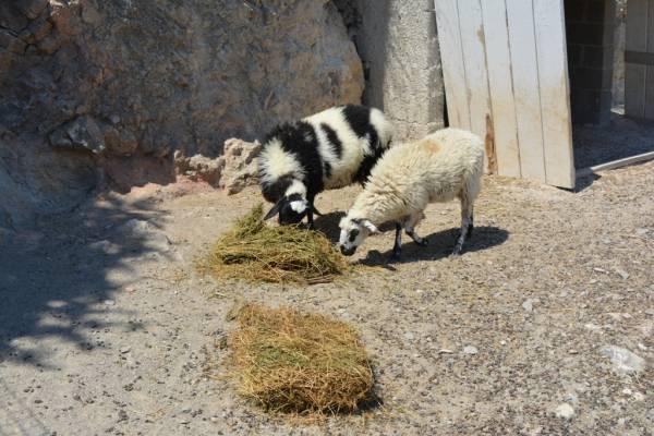 Εκδοση άδειας διατήρησης κτηνοτροφικών εγκαταστάσεων στην Τριφυλία