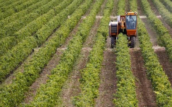 Στο πρώτο δεκαπενθήμερο του Σεπτεμβρίου η ενδιάμεση δόση της εξισωτικής αποζημίωσης σε αγρότες