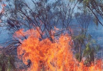 Προσαγωγή κατοίκου της περιοχής για εμπρησμό για τη φωτιά στα Μενινά -Υπό έλεγχο το πύρινο μέτωπο