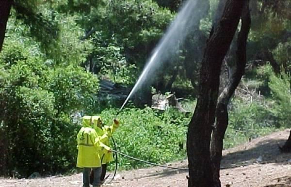 Δεν θα γίνει δακοκτονίασε 12 κοινότητες του Δήμου Καλαμάτας