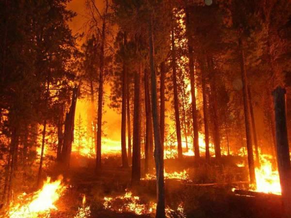Ηλεκτρονική διαχείριση των πυρκαγιών και στη Μεσσηνία