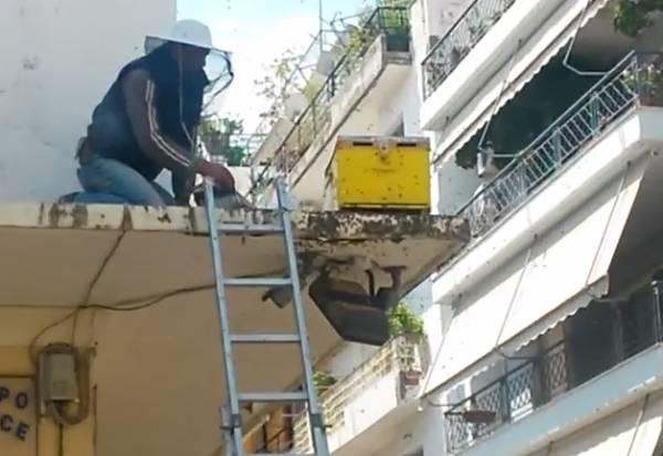 Σμήνος μελισσών αναστάτωσε το κέντρο της Καλαμάτας! (βίντεο)