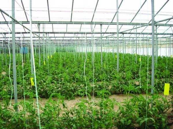 Φυτεύσεις σε 2.800 στρέμματα θερμοκηπιακών καλλιεργειών στην Τριφυλία