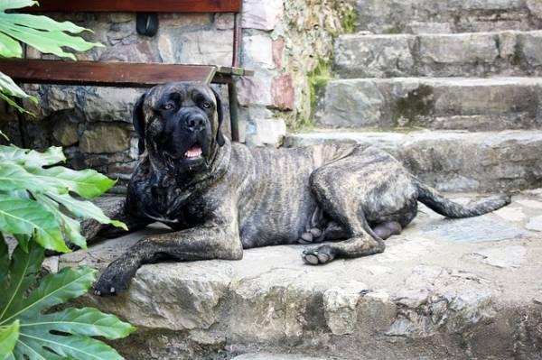 Ευθανασία στα σκυλιά που δάγκωσαν τη γυναίκα στην Καλαμάτα