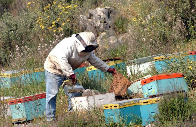 Μεσσηνία: Νεκρός 75χρονος από επίθεση μελισσών!