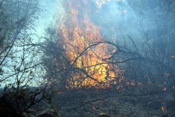 Φωτιά στην Καρυούπολη Λακωνίας