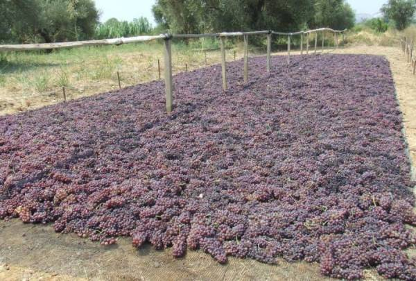 Τα berries και οι Τούρκοι εξαφανίζουν την ελληνική σταφίδα