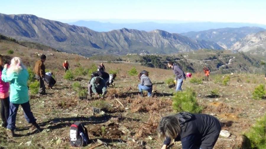 Αναδάσωση στο δάσος Ταϋγέτου - ΕΛΕΥΘΕΡΙΑ Online