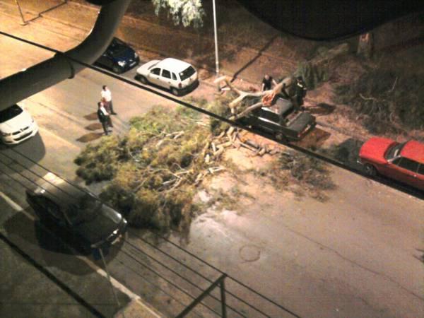 Ευκάλυπτος έσπασε και έπεσε σε δρόμο στην Καλαμάτα προκαλώντας ζημιές σε ΙΧ
