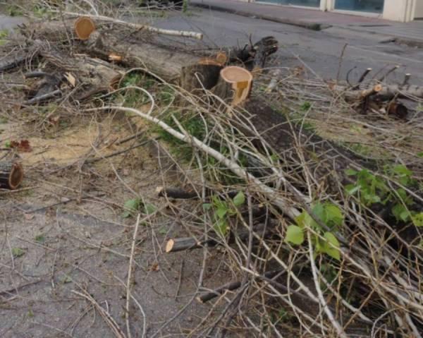 Κοπή δέντρων σε δρόμους της Μεσσηνίας