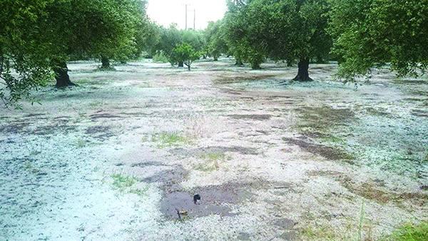 Ζημιές σε αμπέλια, ελιές και κηπευτικά προκάλεσε η χαλαζόπτωση στη Μεσσηνία