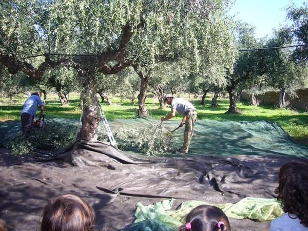 Στις 27 του μήνα η προκαταβολή της επιδότησης των αγροτών - Ζεστό χρήμα στην αγορά