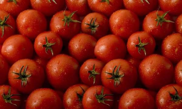 Οι ντομάτες Πολωνίας και η... κορυφή του παγόβουνου