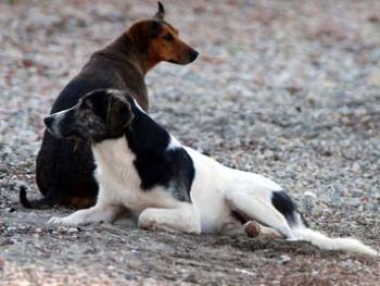 Δηλητηρίασαν σκυλιά  στους δρόμους των Φιλιατρών