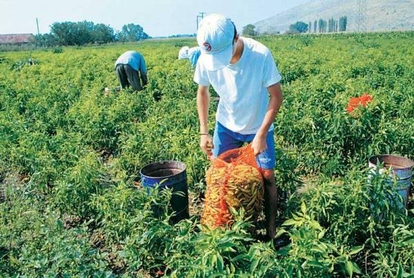 Στις 8.000 θα φθάσουν οι εγκρίσεις για νέους αγρότες - Ελπίδες και για ένταξη επιλαχόντων