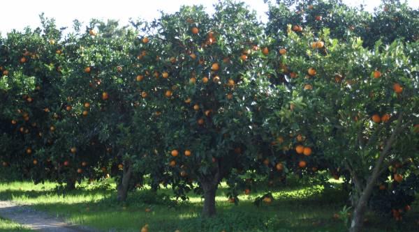 Ελαιόλαδο Μεσσηνίας, πορτοκάλια Λακωνίας και αγκινάρα Αργολίδας στην ΕΡΤ2